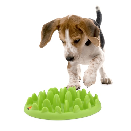 Northmate Green Mini for Dogs